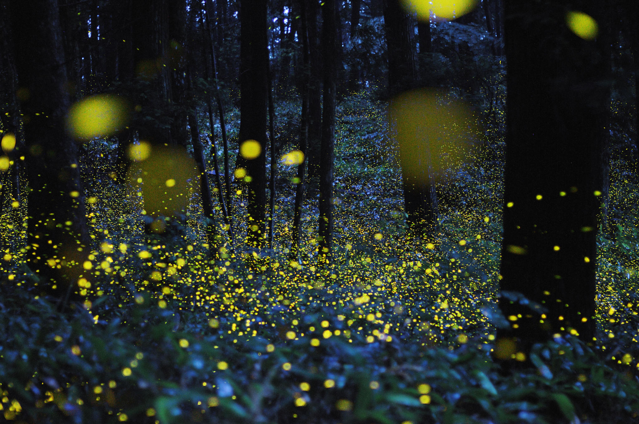 05.-Firefly-image_TH
